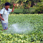 Thuốc tăng trưởng và công nghệ trồng rau siêu tốc