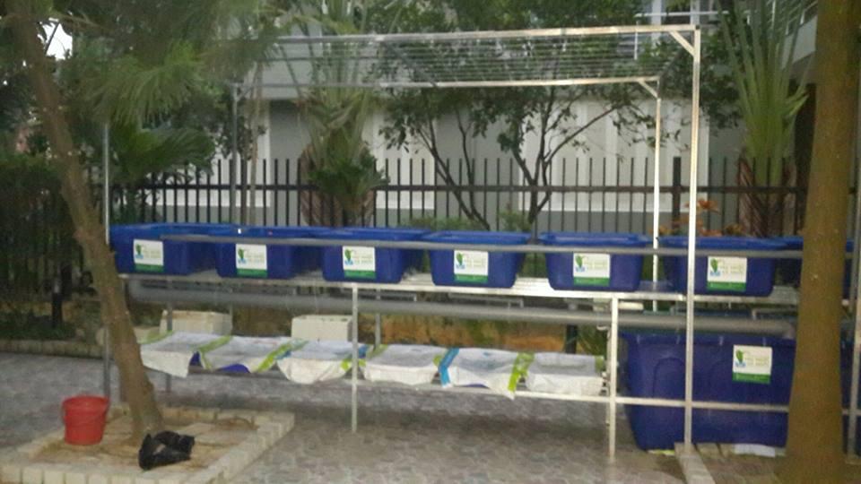 gian-rcxs-aquaponics-7-khay-rau-biet-thu-tay-ho-hn-cua-anh-thang-2