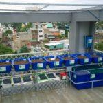 Giàn RXCS Aquaponics 7 khay rau nhà chị Phượng Trần Quang Khải