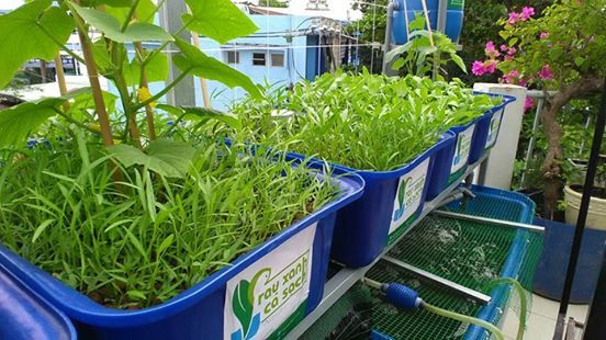 he-aquaponics-mini-5-khay-rau_1