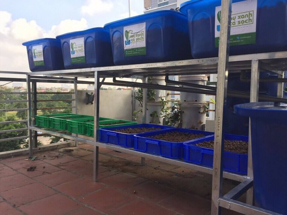 aquaponics-ha-noi-1