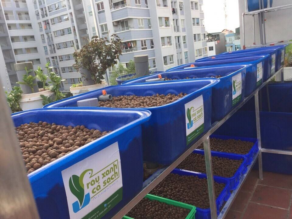 aquaponics-ha-noi-2