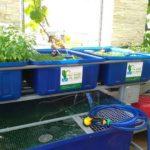 Nguyên tắc của hệ thống trồng rau sạch tự động