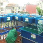 Cách lắp đặt hệ thống trồng rau nuôi cá Aquaponics