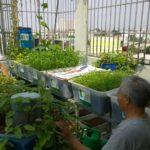Hệ thống trồng rau xanh nuôi cá sạch 100%