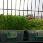 Cây trồng – Yếu tố quan trọng trong hệ Aquaponics