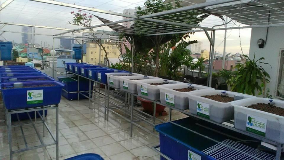 He-aquaponics-18-khay-rau-trang-xanh-quan-1-ho-hao-hon-1