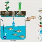 Khái niệm rau sạch Aquaponics