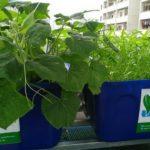 Lợi ích của hệ thống trồng rau nuôi cá tự động Aquaponics