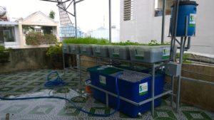 Các yếu tố chính tạo nên hệ thống rau xanh cá sạch Aquaponics2