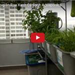 Video toàn cảnh giàn Rau Xanh Cá Sạch Aquaponics