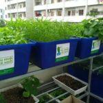 Dịch vụ trồng rau nuôi cá Aquaponics trên sân thượng ở TP. Hồ Chí Minh