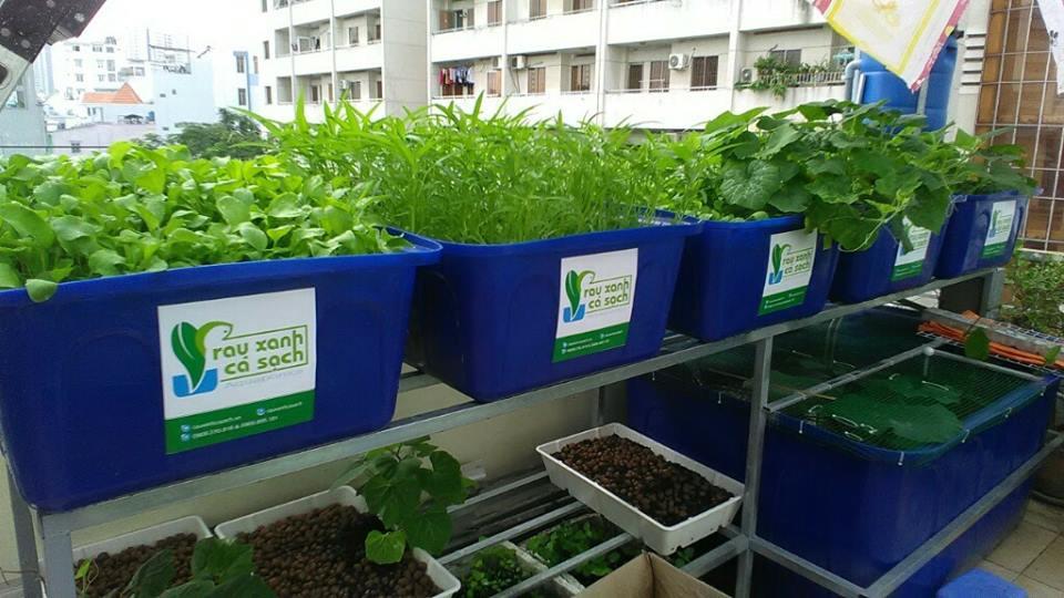 Dịch vụ trồng rau nuôi cá Aquaponics trên sân thượng ở TP. Hồ Chí Minh1