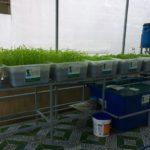 Dịch vụ trồng rau sạch hữu cơ, rau sạch Aquaponics tại nhà