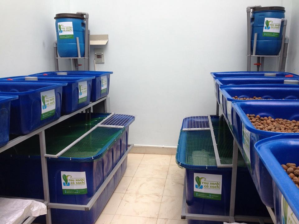 Hệ thống Rau xanh cá sạch Aquaponics xanh và trắng3