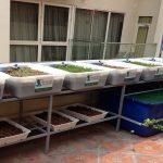 Lắp đặt giàn rau sạch hữu cơ và giàn rau sạch Aquaponics tại nhà