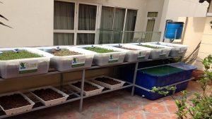 Lắp đặt giàn rau sạch hữu cơ và giàn rau sạch Aquaponics tại nhà2