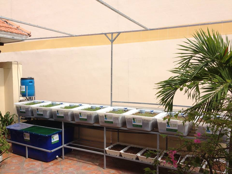 Lắp đặt giàn rau sạch hữu cơ và giàn rau sạch Aquaponics tại nhà3