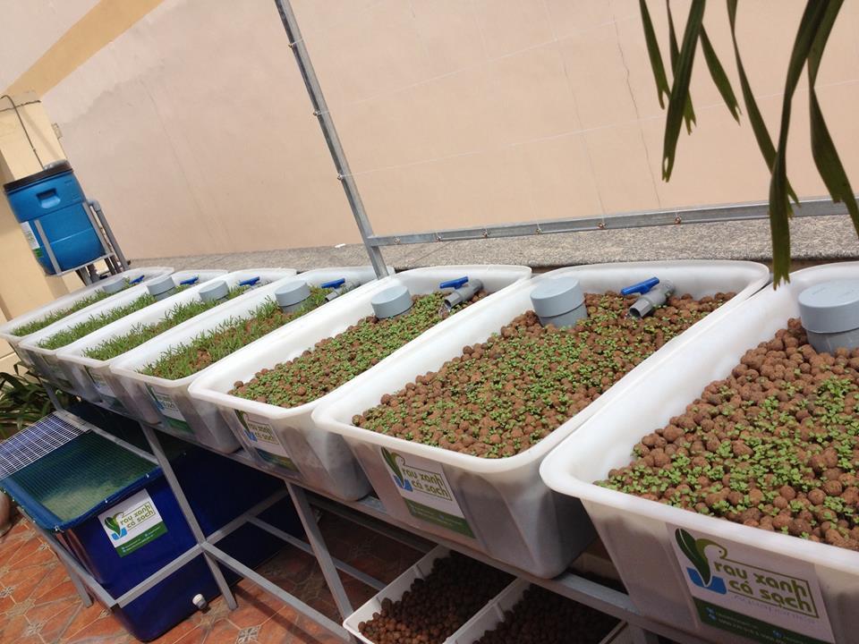 Lắp đặt giàn rau sạch hữu cơ và giàn rau sạch Aquaponics tại nhà4