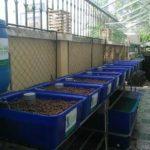 Trồng rau nuôi cá tại nhà – Không còn khó khăn