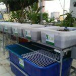 Vật dụng cần thiết cho một hệ Rau xanh cá sạch Aquaponics