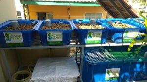 Giàn trồng rau hữu cơ Aquaponics hệ mini trên sân thượng1