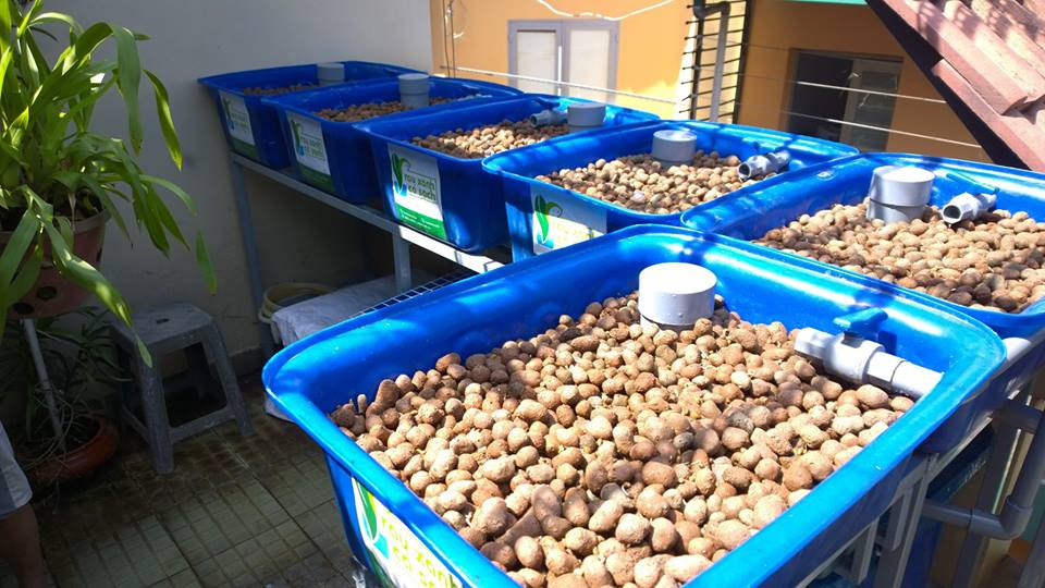 Giàn trồng rau hữu cơ Aquaponics hệ mini trên sân thượng2
