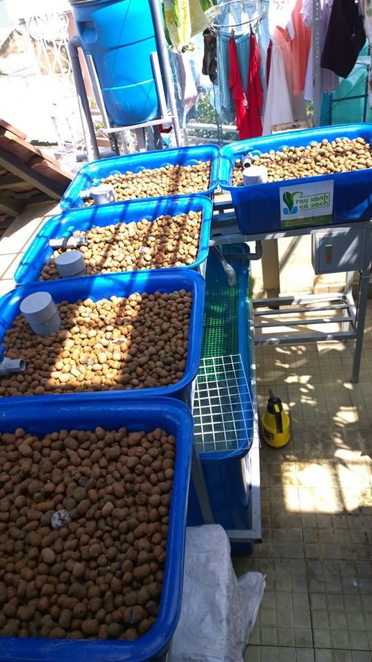Giàn trồng rau hữu cơ Aquaponics hệ mini trên sân thượng3