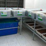 Hướng dẫn thiết kế hệ thống trồng rau nuôi cá Aquaponics tại nhà