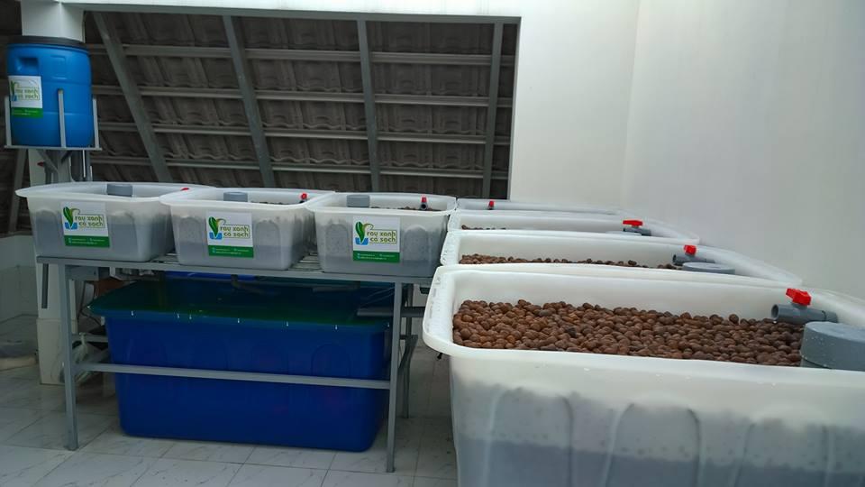 Hướng dẫn thiết kế hệ thống trồng rau nuôi cá Aquaponics tại nhà1