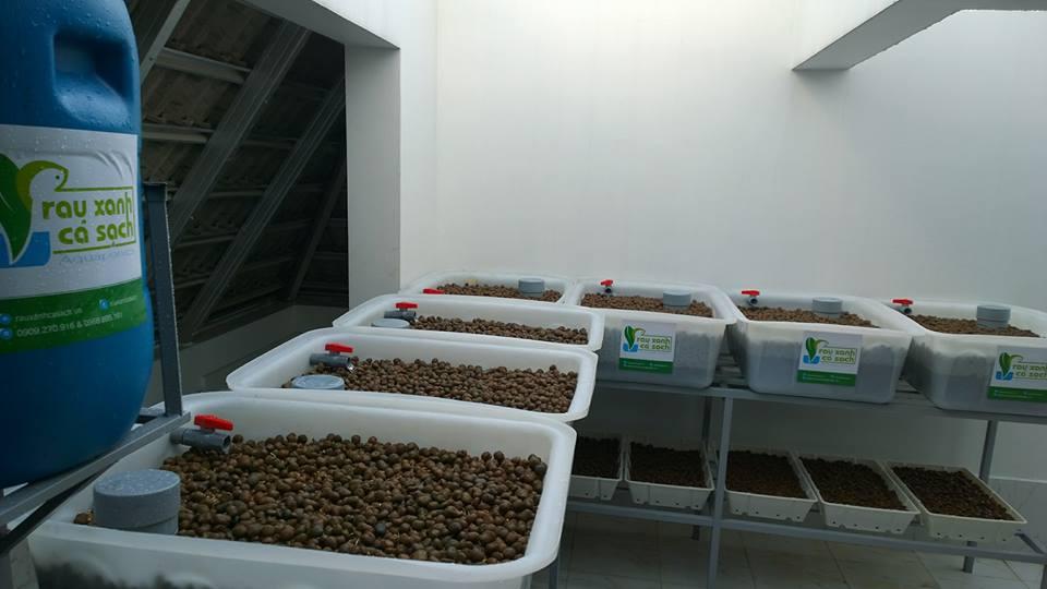 Hướng dẫn thiết kế hệ thống trồng rau nuôi cá Aquaponics tại nhà2