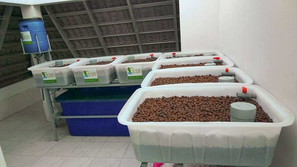 Hướng dẫn thiết kế hệ thống trồng rau nuôi cá Aquaponics tại nhà4