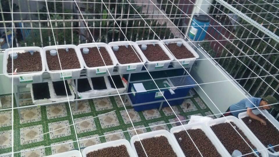 Những yếu tố cơ bản để có một vườn rau xanh cá sạch Aquaponics
