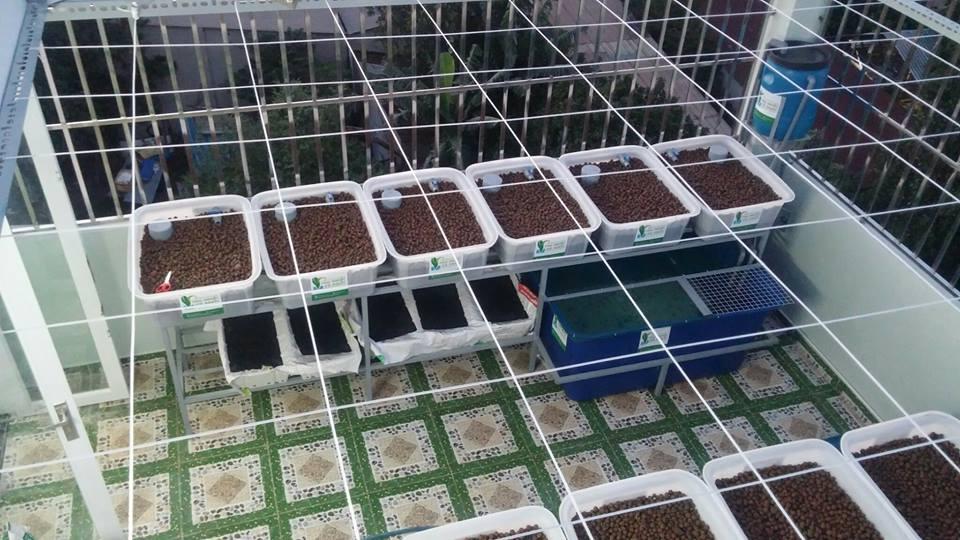 Những yếu tố cơ bản để có một vườn rau xanh cá sạch Aquaponics1
