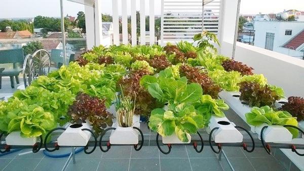 Phương pháp trồng rau thủy canh tại nhà13
