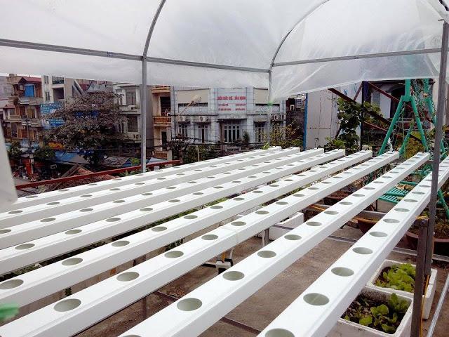 Phương pháp trồng rau thủy canh tại nhà6