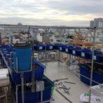 Aquaponics là sự kết hợp của nuôi trồng thủy sản và thủy canh