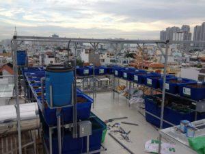 Sự kết hợp của nuôi trồng thủy sản và thủy canh là Aquaponics