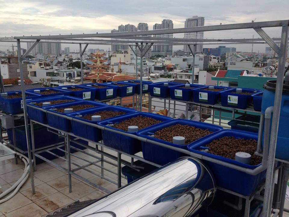Sự kết hợp của nuôi trồng thủy sản và thủy canh là Aquaponics1