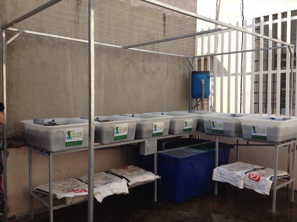 So sánh phương pháp trồng rau Aquaponics và trồng rau thủy canh1