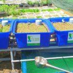 Tìm hiểu về hệ trồng rau nuôi cá Aquaponics không tốn thời gian chăm sóc