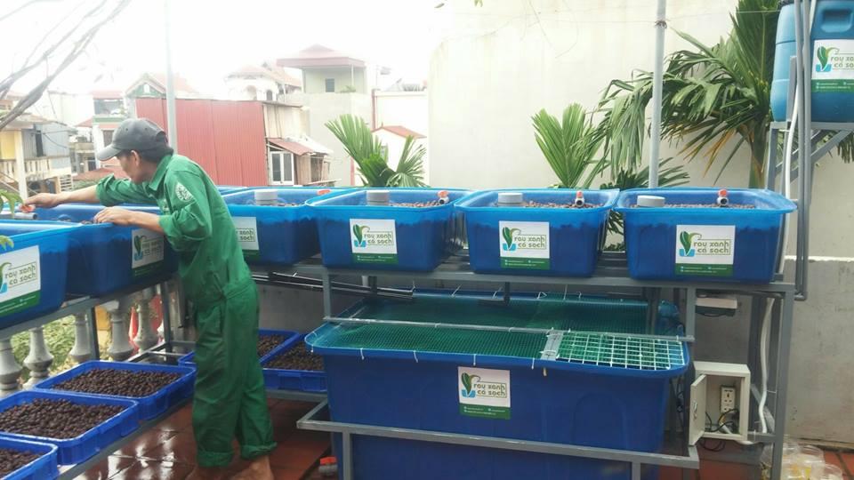 Tư vấn và lắp đặt hệ thống trồng rau nuôi cá Aquaponics tại nhà1