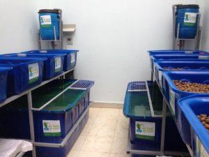 Trồng rau Aquaponics hơn trồng rau thủy canh như thế nào3