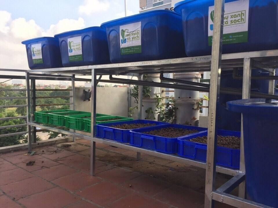 Vì sao nên chọn trồng rau sạch Aquaponics hay rau thủy canh1