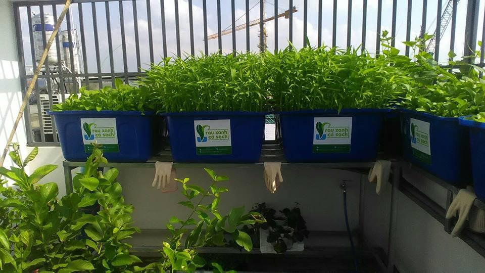 Giới thiệu hệ thống trồng rau Aquaponics trên sân thượng