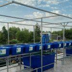 Hệ RXCS Aquapnics đôi 12 khay rau 100L + 2 hồ cá 750L