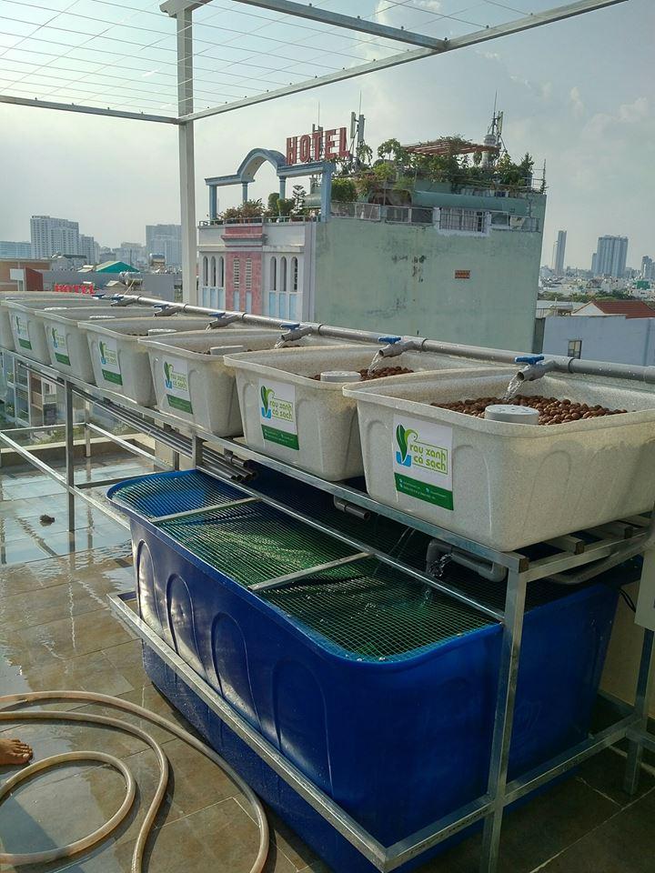 khay-rau-gia-da-hoa-cuong-he-aquaponics-2