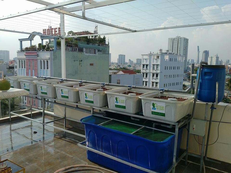 khay-rau-gia-da-hoa-cuong-he-aquaponics
