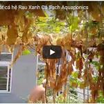 [VIDEO] Dọn giàn cũ – Đón giàn RXCS Aquaponics mới!