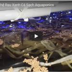 Lươn trong hệ Rau Xanh Cá Sạch Aquaponics